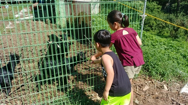 서울에서 온 꼬마 아이들(유진, 재준)이 염소에게 먹이를 주고 있다.