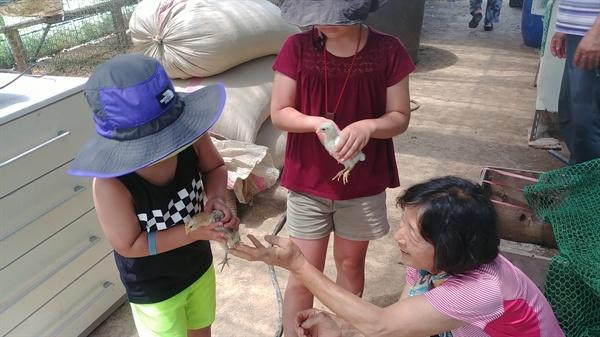 농원지기가 병아리를 한 마리씩 아이들의 손에 안겨준다.