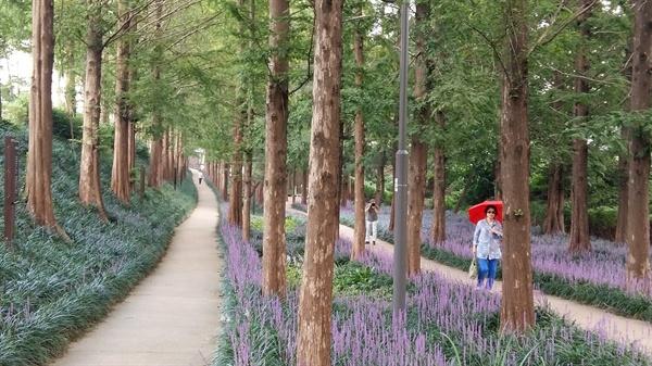 '맥문동 숲길'이라는 별칭에서 알 수 있듯이 맥문동이 꽃을 피워내 길이 온통 보라색 융단으로 뒤덮여 있다
