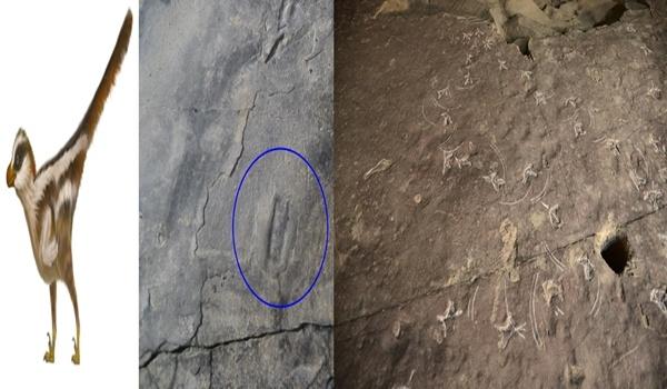 세계 최소형 랩터 공룡 발자국  좌(진주 혁신도시에서 발견된 1cm 크기에 불과한 랩터공룡 발자국), 우(진주 가진리에서 발견된 저어새 부리흔적)