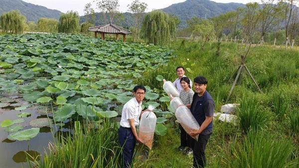 거창창포원 생태연못 비단잉어 1천 마리 방류.