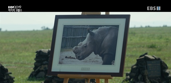 다큐멘터리 <마지막 코뿔소> 스틸컷