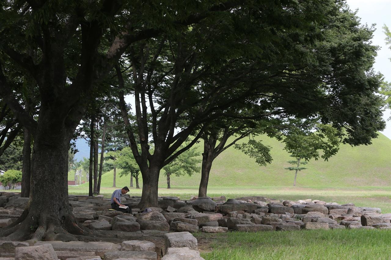 대릉원 나무 그늘 아래서 독서 삼매경에 빠진 어르신.