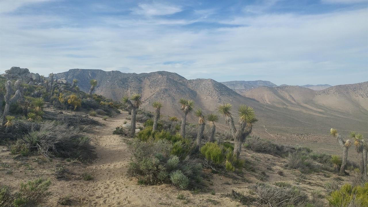 넓은 사막 광활한 대자연 정말 넓은땅이 미국이라고 생각되었다.