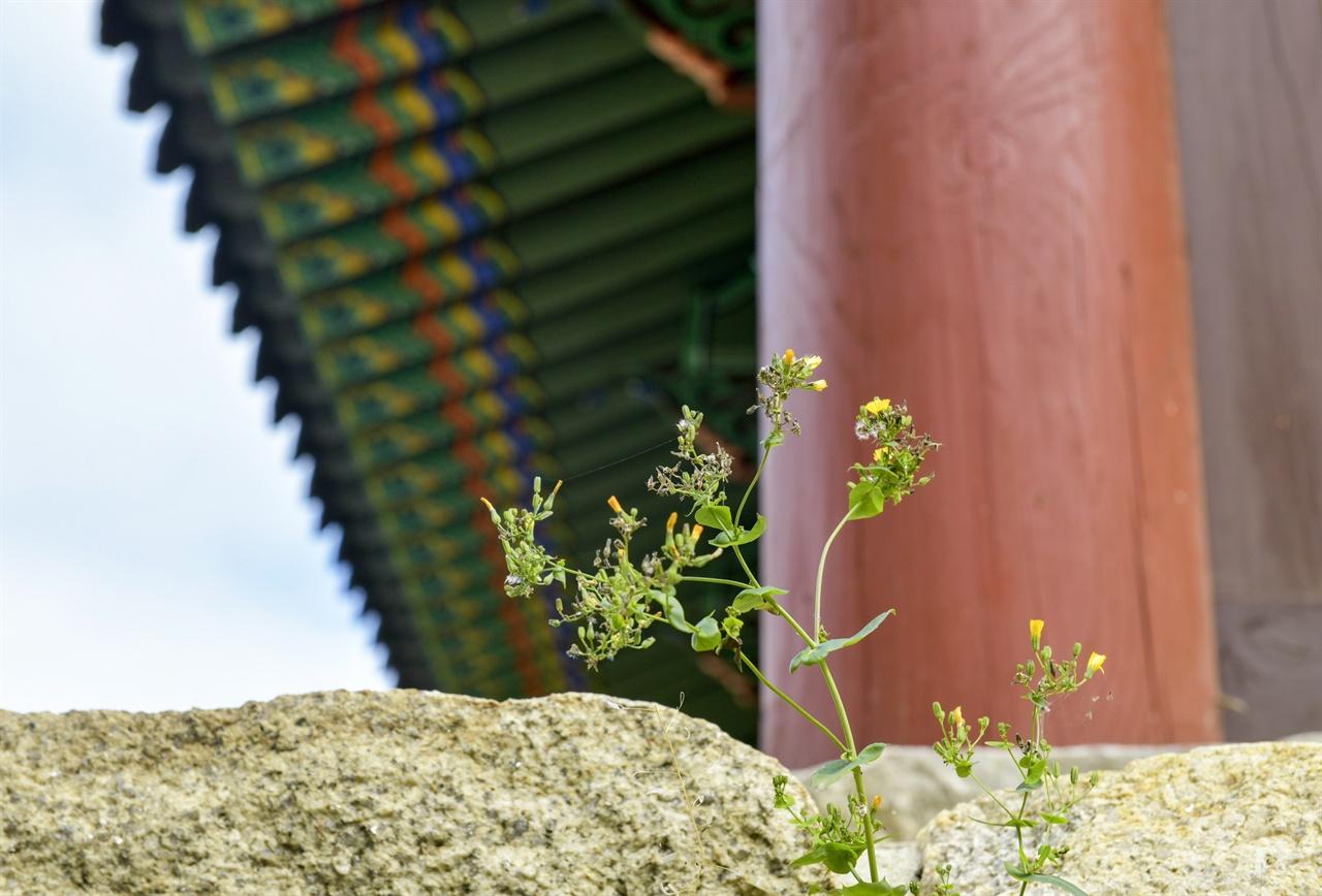 520년 아도화상이 창건한 천년 고찰의 돌틈 사이로 해마다 풀 한 포기, 꽃 한 포기가 피어난다.