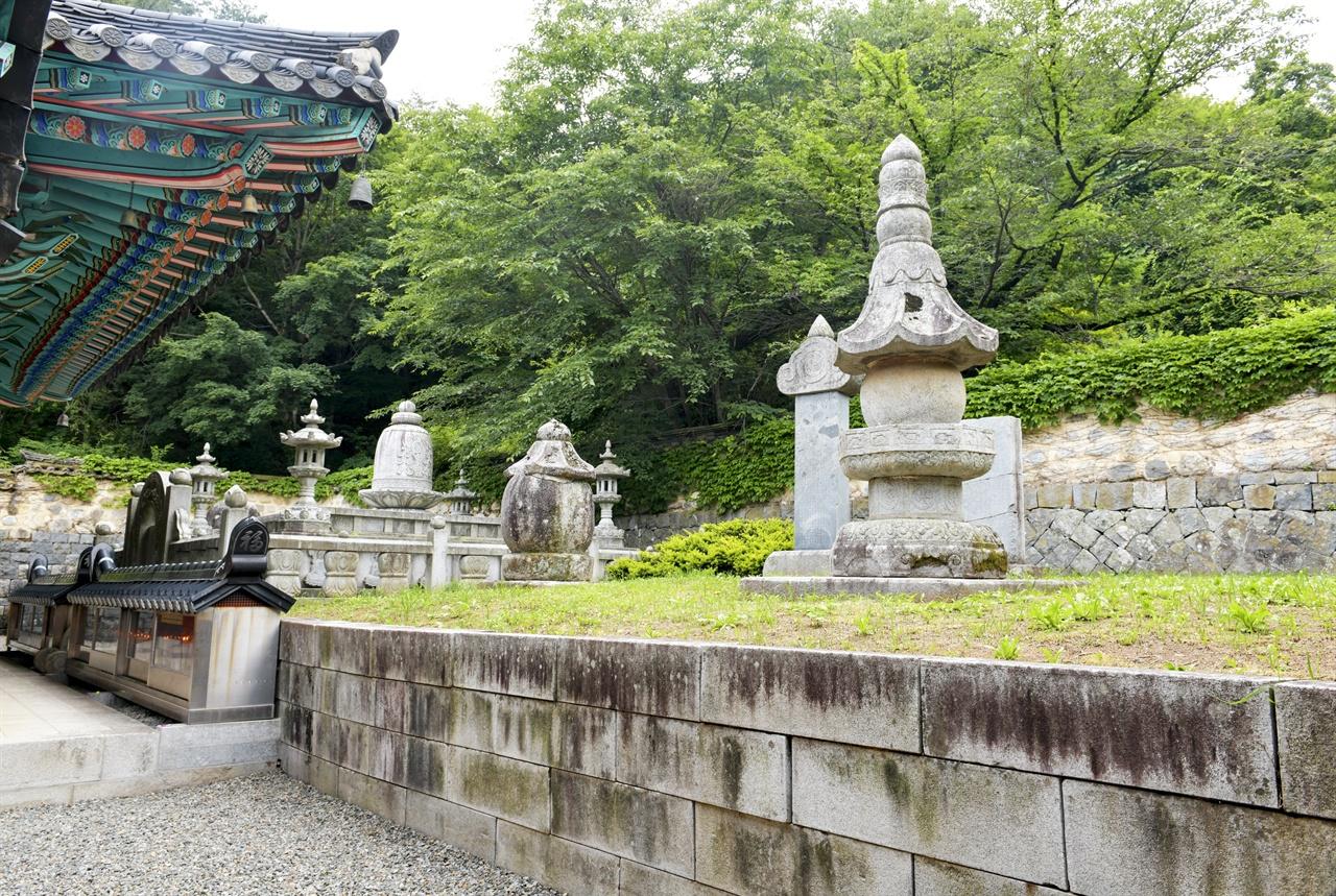 부처님의 치아 진신사리를 모신 사리탑을 숲이 감싸고 있다.