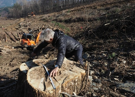 평창올림픽 경기장 공사 때 잘려 나간 지름 123cm 들메나무는 조 기자를 울컥하게 했다.