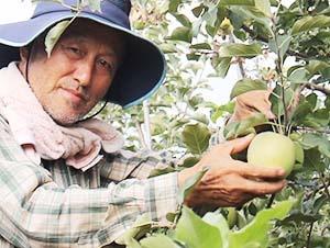 이기준 이장이 그가 일구는 과수원에서 사과나무를 가꾸고 있는 모습.