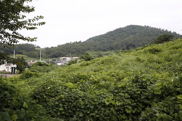 전남 진도에 있는 왜덕산과 내동마을. 왜덕산은 진도사람들이 정유재란 때 죽은 일본군의 시신을 거둬 묻어준 곳이다.