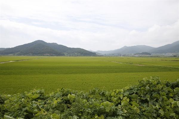 왜덕산과 내동마을 앞으로 펼쳐지는 들녘. 지금은 간척이 돼 농사를 짓고 있지만, 간척되기 전까지는 바닷물이 들어왔다.