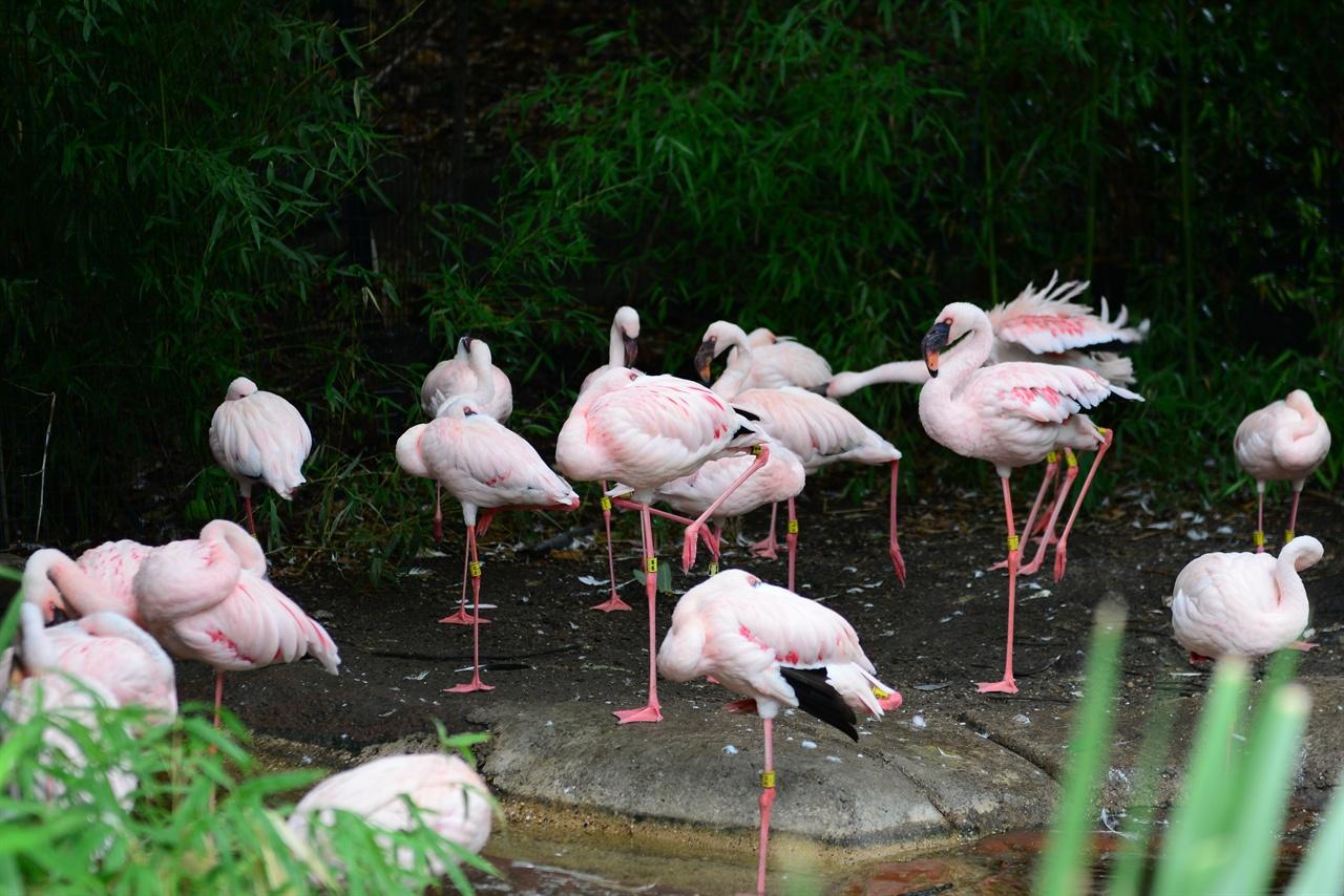 댈라스 동물원 백조