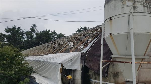 서산 부석면 가사리 한 양계농가에는 어린 닭 1만 5천 마리가 떼죽음을 당했다. 해안가에 인접한 이곳은 태풍 피해를 직접적으로 입어, 양계장 비닐하우스를 직접 강타했다.