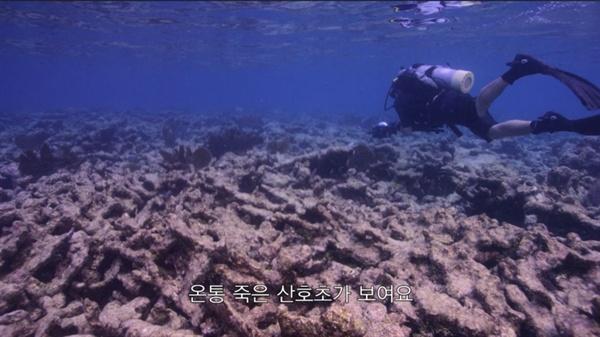 넷플릭스 오리지널 다큐멘터리 <산호초를 따라서> 중 한 장면