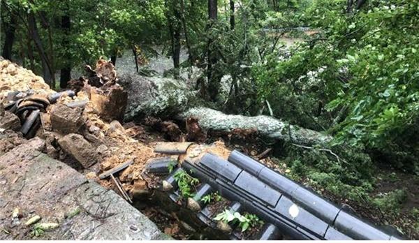 경남 합천 해인사 학사대 전나무 (천연기념물 541호) 제13호 태풍 '링링'으로 인해 부러졌다.
