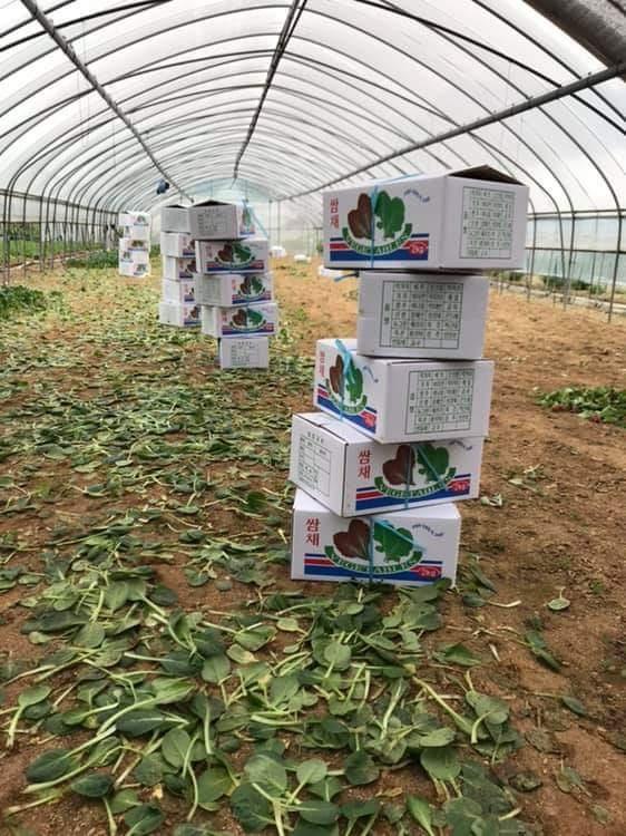 비닐하우스 4총사가 일하는 농장 시금치 재배가 끝나고 일주일 뒤에 일을 시작할 거라던 농장은 추석 연휴가 지날 때까지 무급 휴가다.