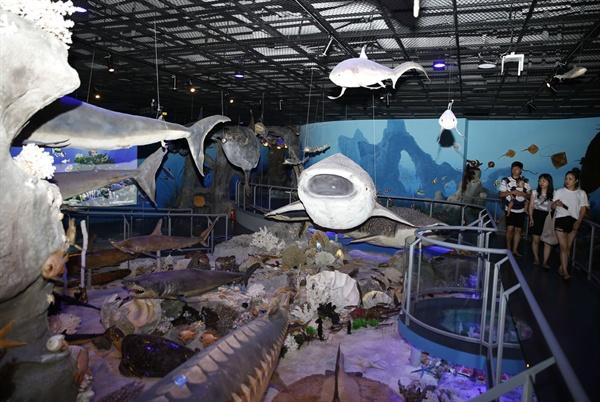 해남땅끝해양자연사박물관 전시관. 어류, 상어류, 갑각류 등 5만 점이 넘는 해양생물 표본이 전시돼 있다. 모두 실물 표본들이다.