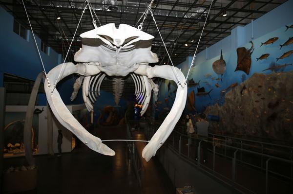 해남땅끝해양자연사박물관에 전시돼 있는 대왕고래 골격. 대왕고래는 지구에서 가장 큰 동물에 속한다. 전시된 골격의 길이만도 25미터에 이른다.