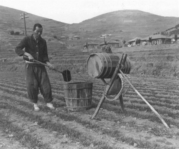보리밭에 인분 거름을 주는 농사꾼(1951. 1. 25.).
