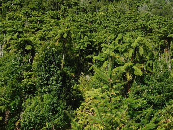 공룡이 튀어 나올 것만 같은 고사리 과에 속하는 식물로 뒤덮인 산책로