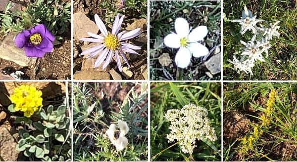 몽골은 대부분 해발 1천미터 이상 고원지대입니다. 여름에도 해가 뜬 낮은 덥고 해가 지면 춥습니다. 몽골에서 본 여름 들꽃들입니다.