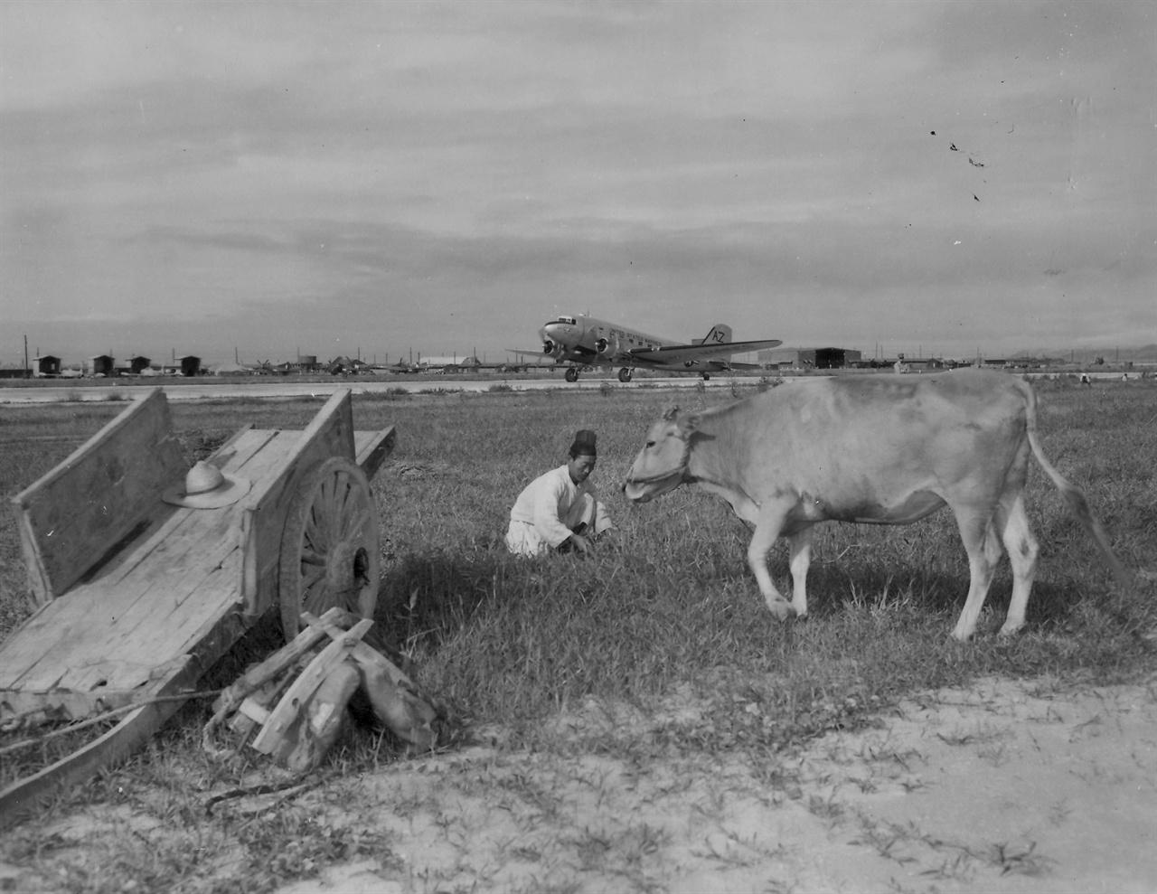 미 공군 비행장 부근에서 풀을 베는 농부(1952. 9. 6. ).