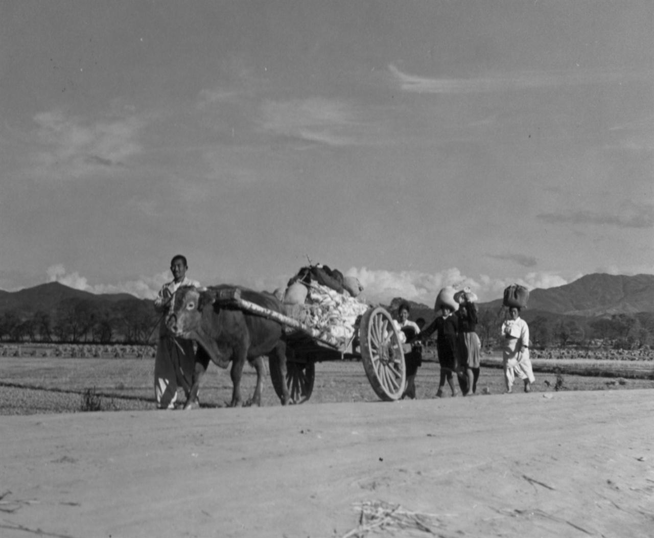 원산, 소달구지에 봇짐을 실은 피란행렬(1950. 11. 8.).