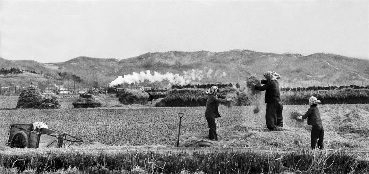 증기기관차와 벼 고르는 아낙들(1964)