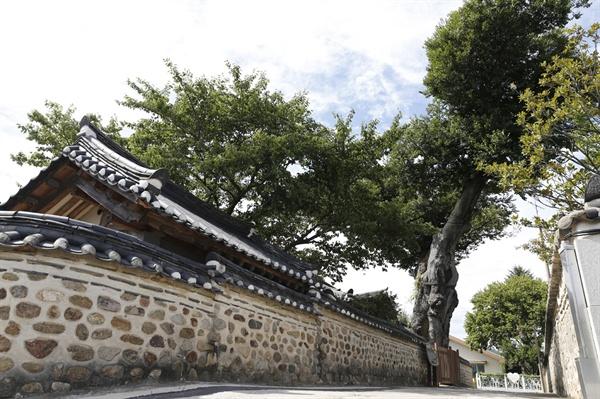 목사내아 담장에 서 있는 수령 500년 넘은 벼락 맞은 팽나무. 소원을 들어주고, 행운을 가져다준다는 나무다.