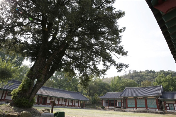 수령 400년 된 비자나무와 어우러지는 나주향교. 옛 나주읍성의 서성문에서 가까이 있다.