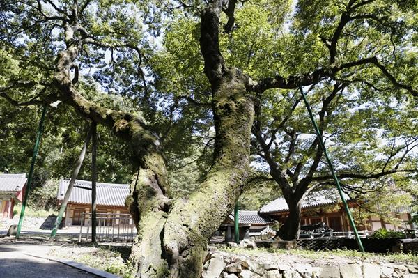 수령 600년 된 팽나무가 먼저 반겨주는 절집 다보사. 옛 절집의 분위기를 고스란히 간직하고 있다.
