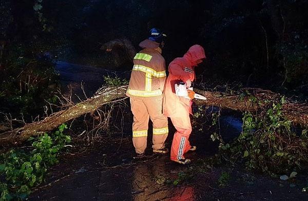 22일 제17호 태풍 '타파'가 덮친 제주지역에 강풍과 폭우로 인한 피해가 속출한 가운데, 제주시 조천읍 북촌리에서 나무가 꺾여 도로를 덮치는 사고가 발생했다. [사진제공=제주소방안전본부]
