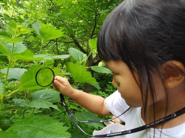 숲을 탐구하는 아이  숲 속에서 나뭇잎를 관찰하는 아이. 광덕산환경교육센터는 다양하고 재미있는 환경교육을 연 수시로 운영하며 찾아가는 환경교육도 진행한다.