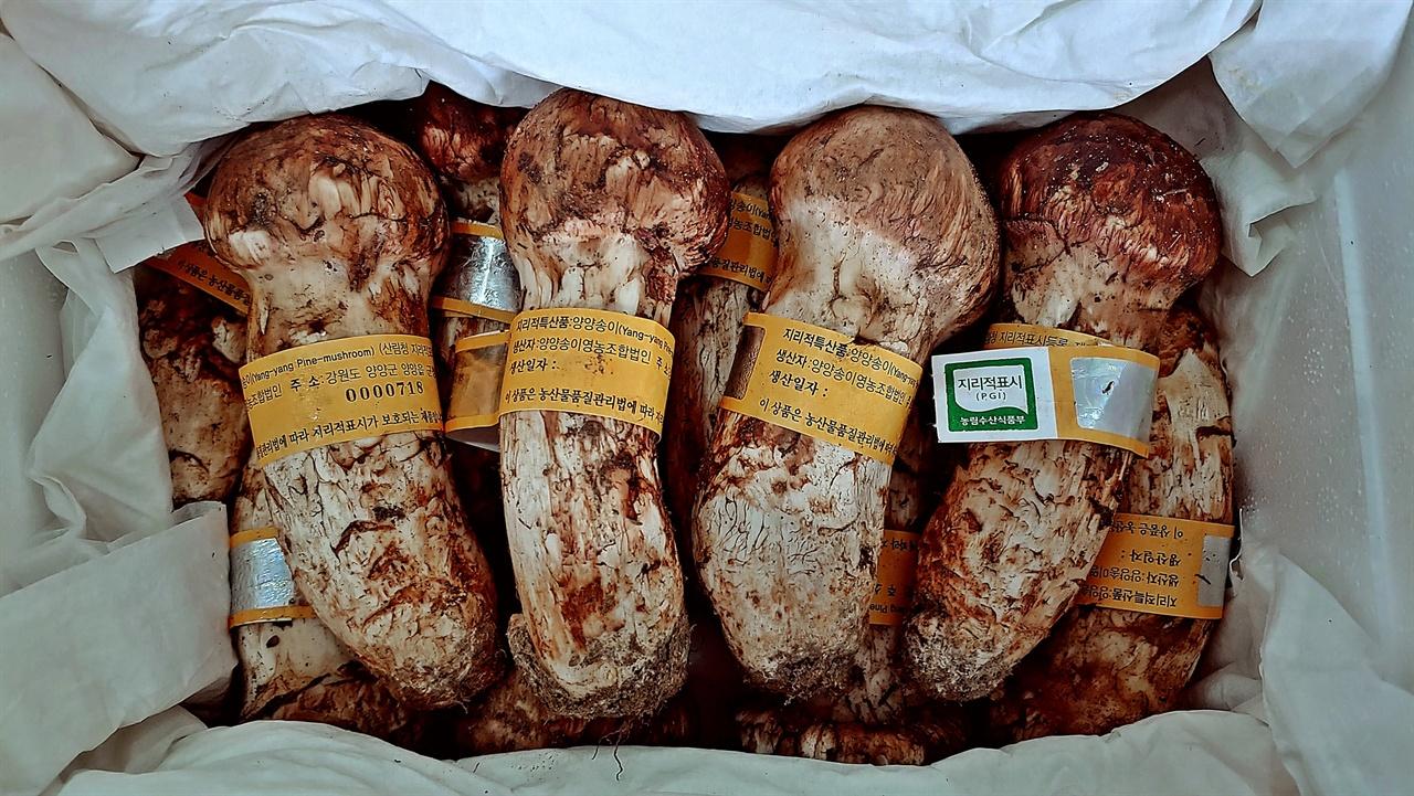 양양송이(1등급) 지리적 표시 제1호인 양양송이는 여타 지역에서 판매되는 송이버섯처럼 등급을 판매상 마음대로 정하지 못한다. 각 등급에 따라 지리적 표시 단체표장이 등급별로 구분되어 묶여 공판되기 때문이다.