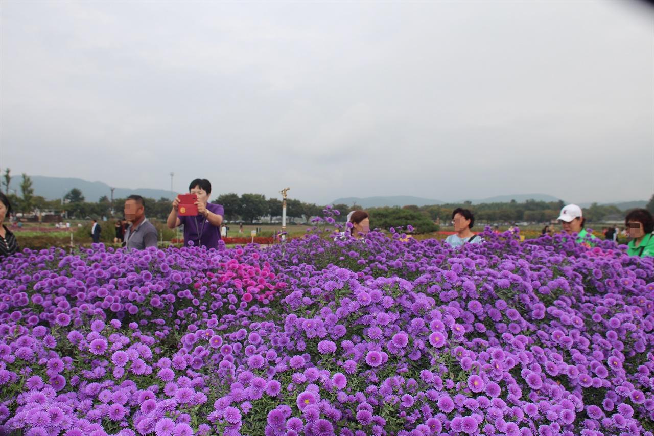 보라색의 환상적인 모습을 연출하고 있는 경주 동부사적지대 꽃밭단지 우선국 모습
