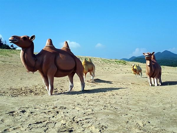 대청도 옥죽동해변에는 해안침식으로 생긴 모래가 계속 쌓이고 있어 모래사막같은 모습을 연상케한다. 모래위에 낙타조형물을 세워 사막같은 느낌을 준다.