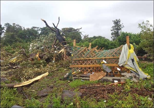 목재 구조물이 강풍에 허물어졌다.