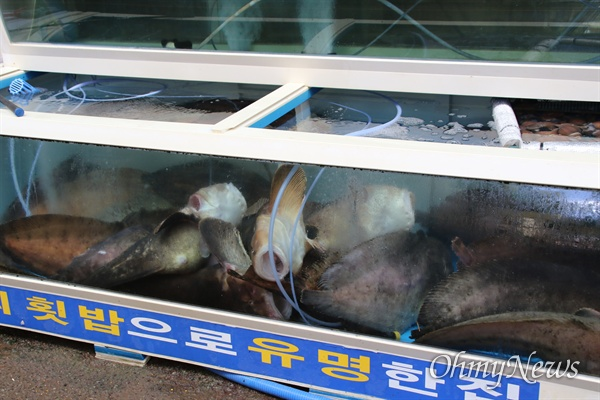 제18호 태풍 '미탁'의 영향으로 경북 영덕군 강구면 강구시장이 도다시 피해를 입은 가운데 한 횟집의 수족관에 물고기들이 죽어 있다.