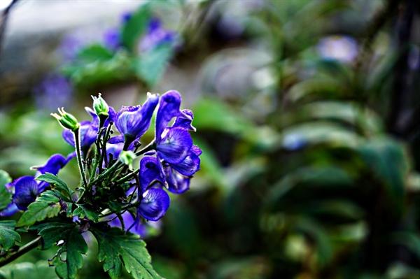 문수봉에서 만난 지리바꽃