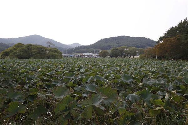 용연저수지를 앞배경으로 자리하고 있는 상동마을 풍경. 사진 오른편으로 청용산이 자리하고 있다.