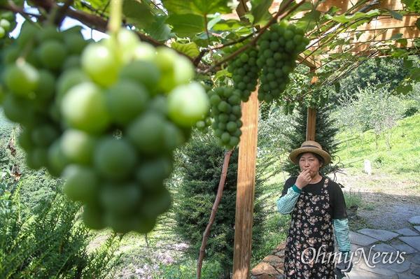 '내 마음의 외갓집'을 운영하는 김영미 대표는 유기농 텃밭과 과수원을 가꾸며 먹거리를 자급자족하고 있다.