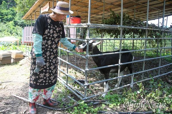 '내 마음의 외갓집'을 운영하는 김영미 대표는 산양을 기르기 시작해 자신의 속소를 손님들에게 산양유로 만든 산양유 라떼를 대접한다.
