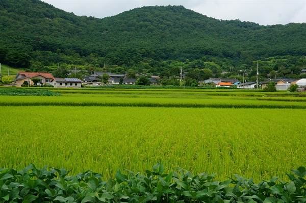 가일마을 정경 가일마을은 풍산들 안 아름다운 산골짜기에 들어섰다. 마을 앞에 너른 달개들, 풍천평야가 펼쳐있다.