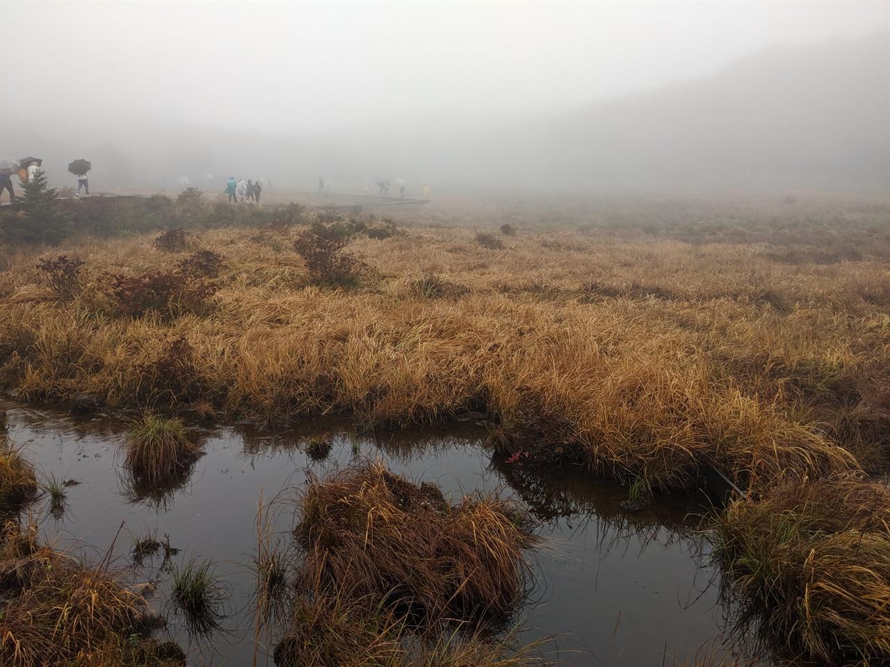 10월의 용늪 7월 말에 방문하면 푸른색 늪에 희귀 야생화들이 피어있다고 한다.