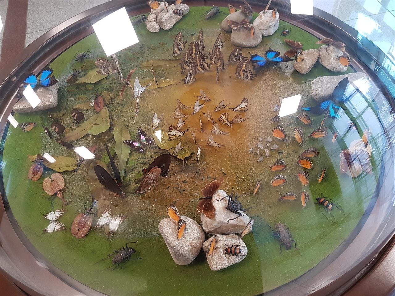 다양한 곤충의 생태를 알려주는 예천 곤충생태원 전시실.