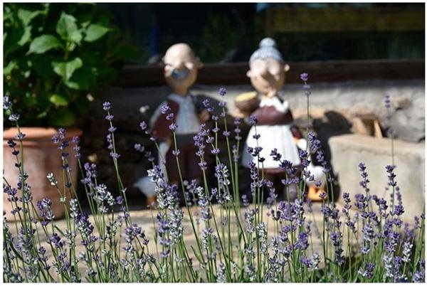 올 6월 영미네 정원 모습.