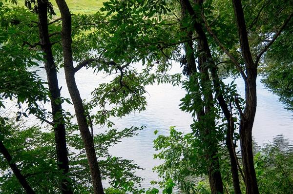양산을 지나는 금강을 사람들은 '양강'이라 불렀다. 예사롭지 않은 물살은 강변의 나무 그림자로 완화된다.
