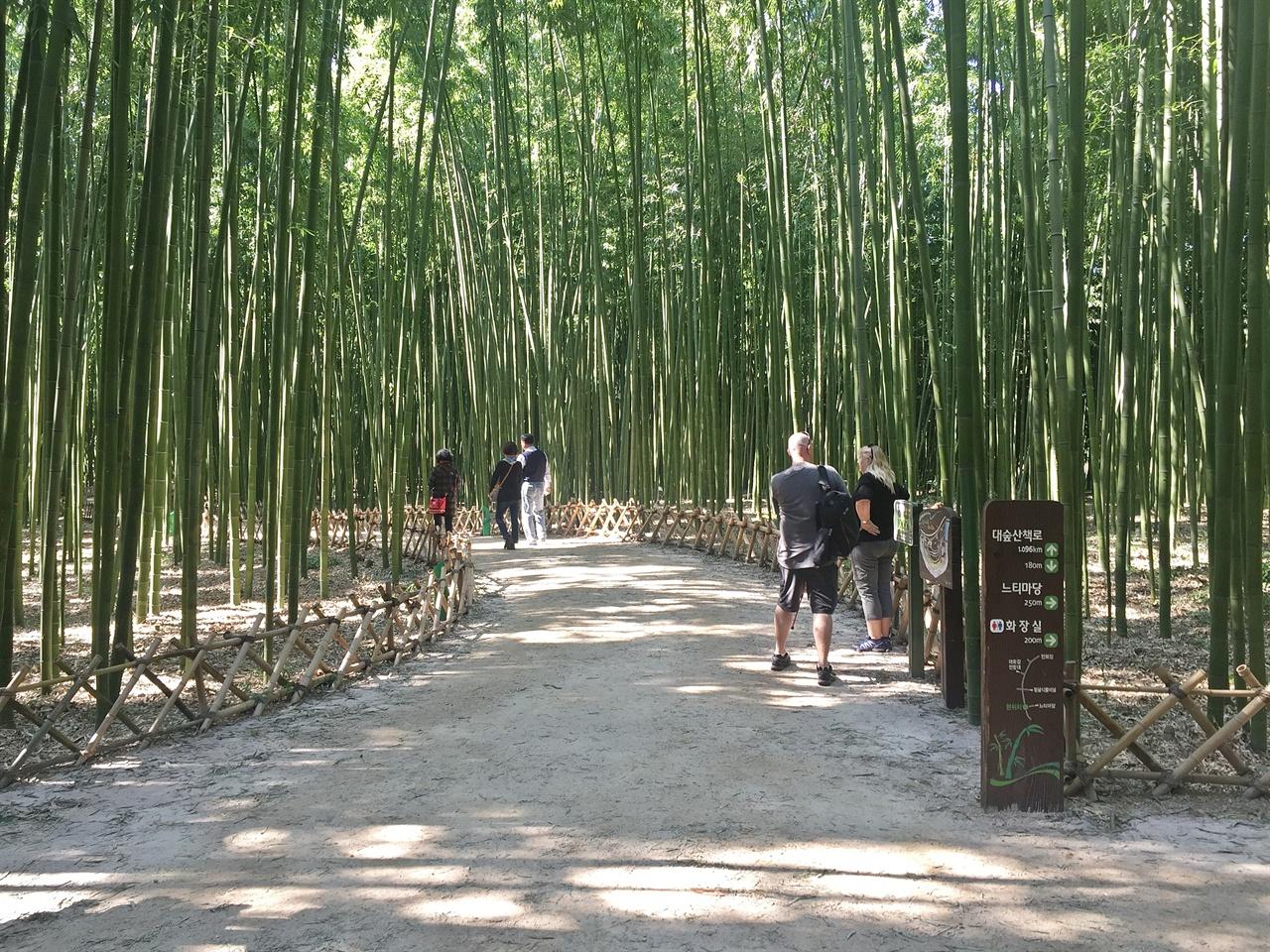 울산 태화강 국가정원 십리대숲에서 산책하는 외국인 관광객 모습