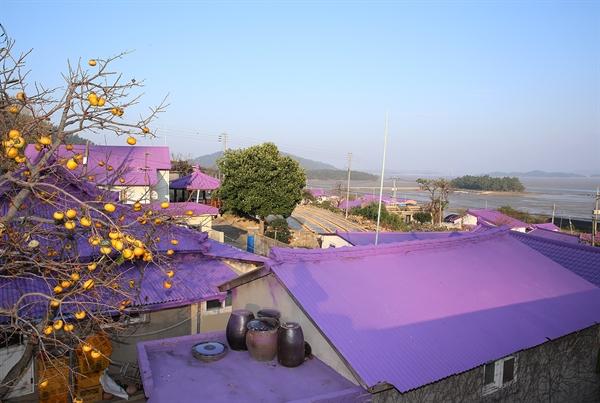 반월도에선 지붕도 보랏빛이다. 주민들은 반월도와 박지도를 보랏빛 '퍼플 섬'으로 가꾸겠다고 여러 준비를 하고 있다.