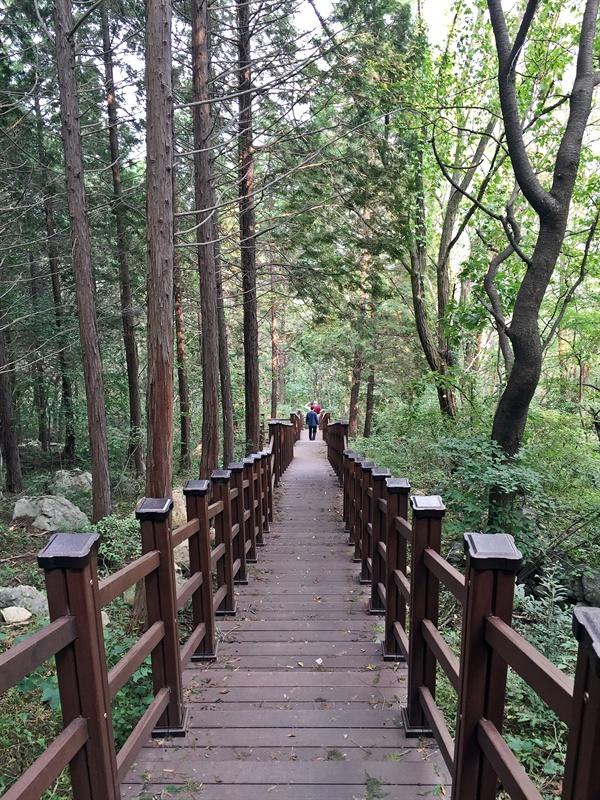경주시 건천읍 송선리에 있는 편백숲 내음길 모습
