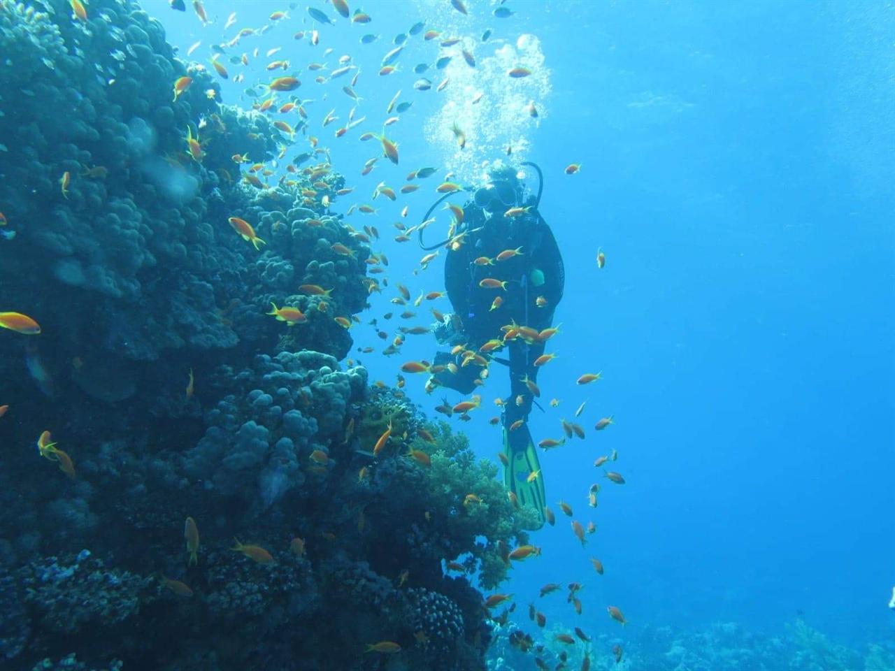 아름다운 다합의 물속.
